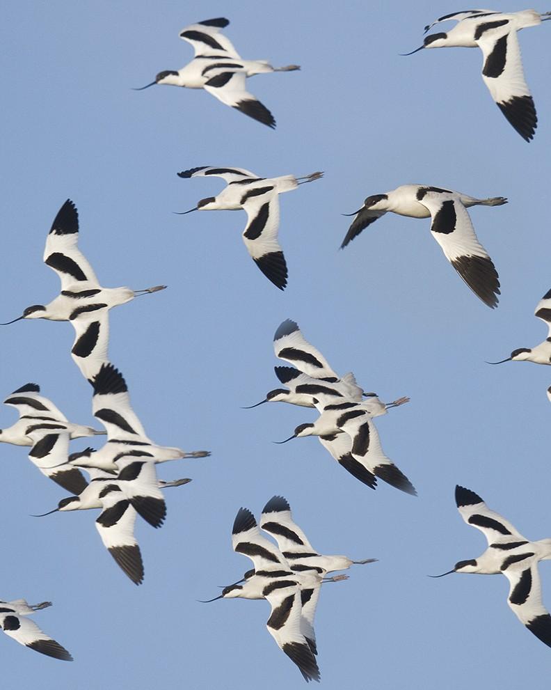 internationale vogeltrekdagen