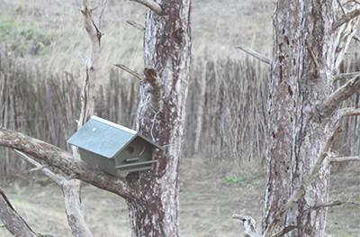 Nestkastjes in het Zwin Natuur Park