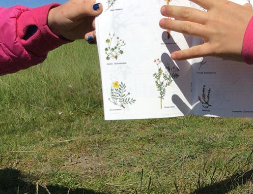 biodiversiteitsstudie planten